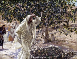 Accursed_Fig_Tree_James_Tissot