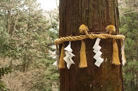 shimenawa tree
